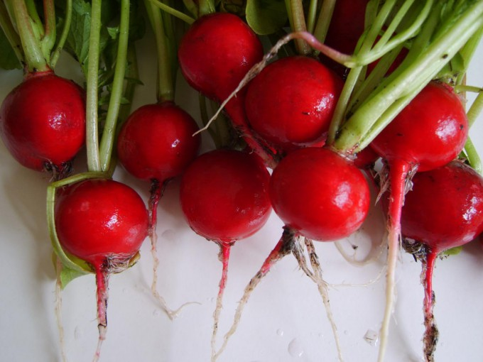 Cherry Belle Radishes